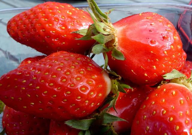 Première fraise