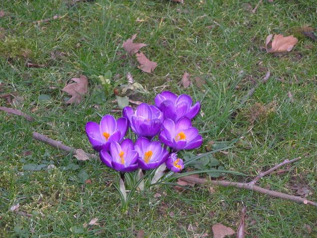 Premières fleurs du printemps 2007