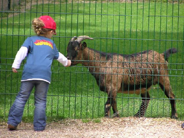 Prends ! la chèvre