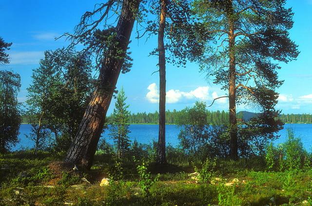 Près du lac Inari