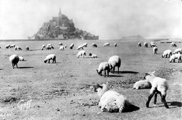 Prés salés au Mont-Saint Michel
