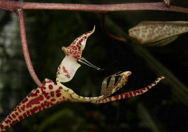 Présent d'orchidée