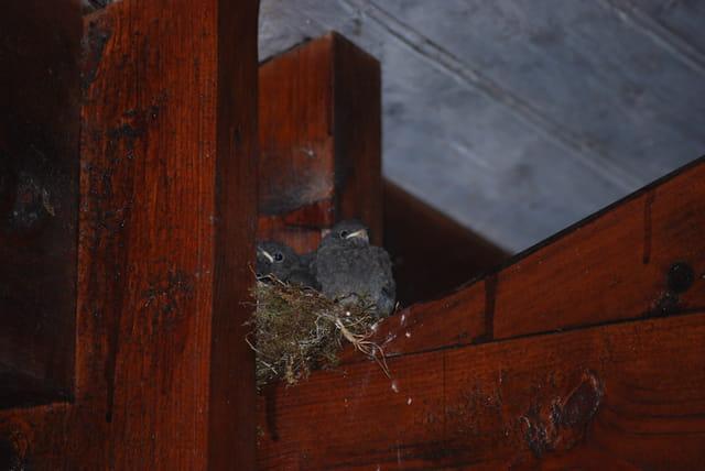presque sortis du nid