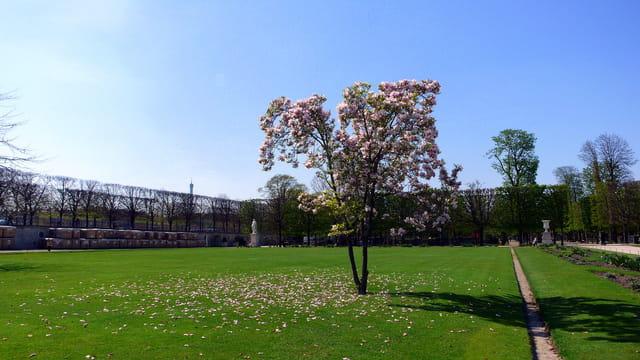 Printemps au jardin des tuileries par catherine burg sur l for Au jardin des tuileries