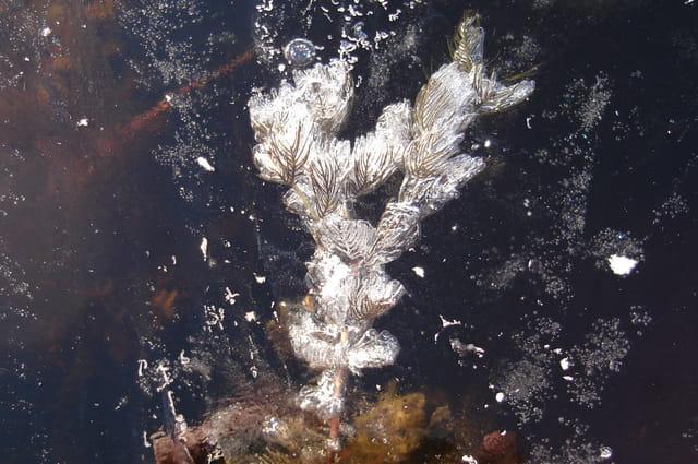 Pris dans la glace