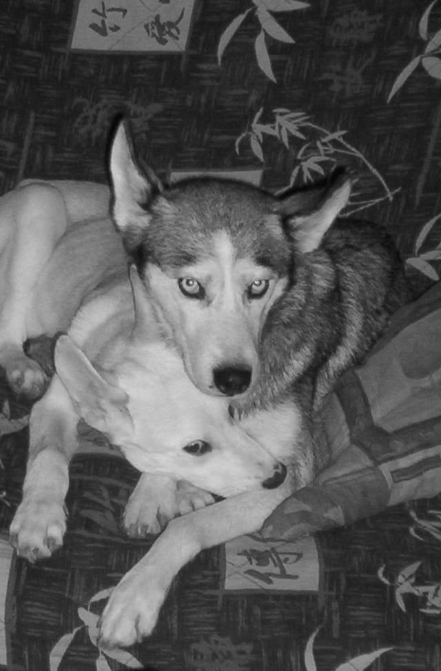 Prisca (husky) et booba son fils
