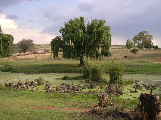 Proche d'un village mdebele
