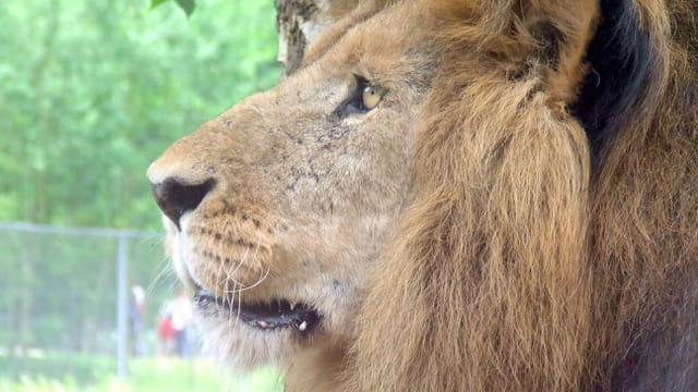 Profil royal