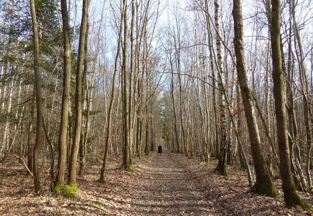 Profiter d'une journée ensoleillée pour une promenade en forêt
