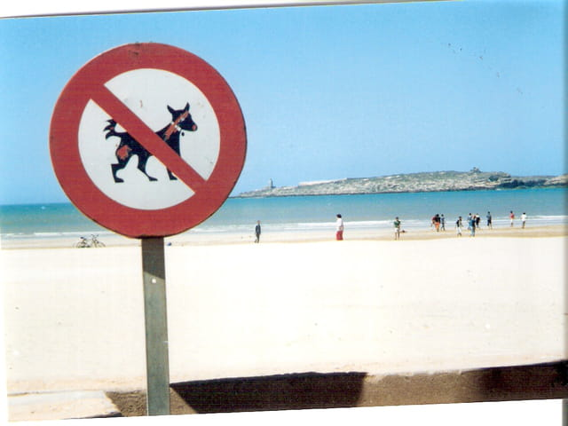 Prohibited to dogs