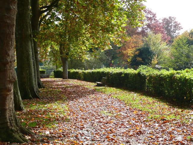 Promenade à l'automne