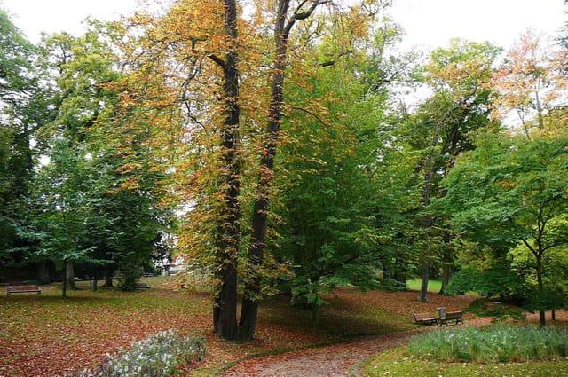 Promenade automnale au jardin botanique 7