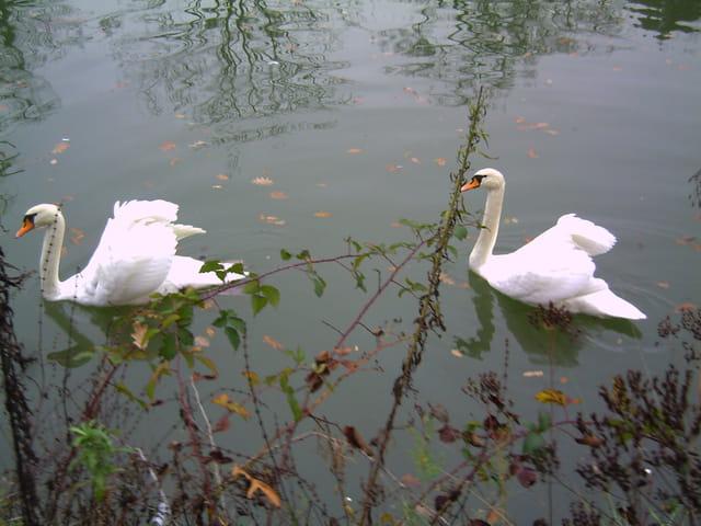Promenade en couple
