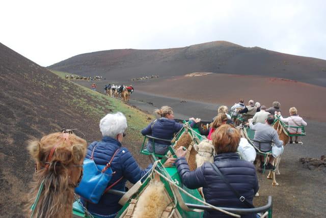 promenade en dromadaires parmi les volcans de Lanzarote
