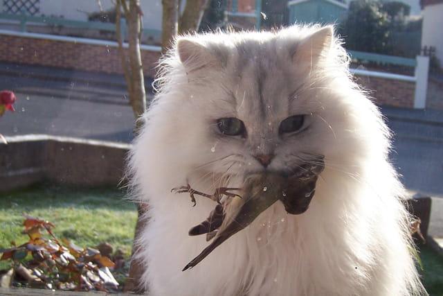 Quand le chat mange l'oiseau