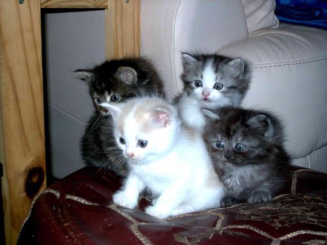 Quatre adorables bébés