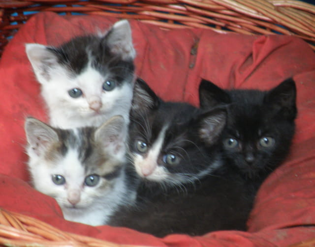 Quatre chatons