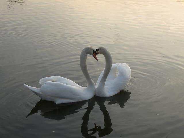 Quel amour