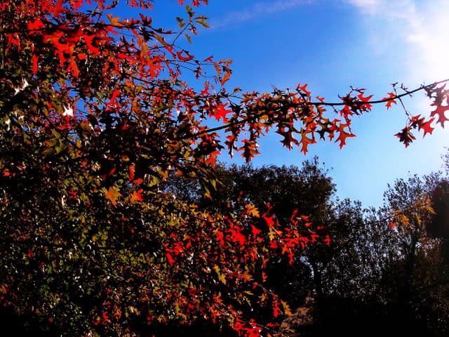 Quelques feuilles rouges