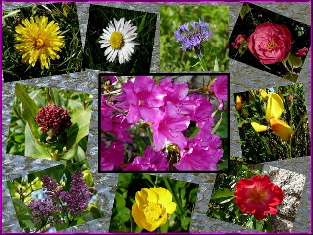 quelques fleurs du jour (Juliane)