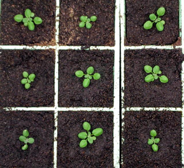 Quelques petites plantes