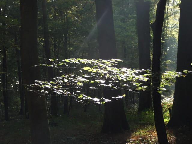 Rai de lumière sur branche arbre forêt