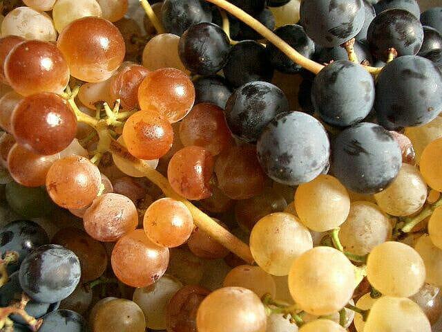Raisins du roussillon