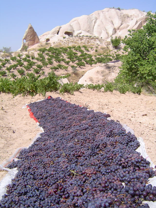 Raison de Cappadoce
