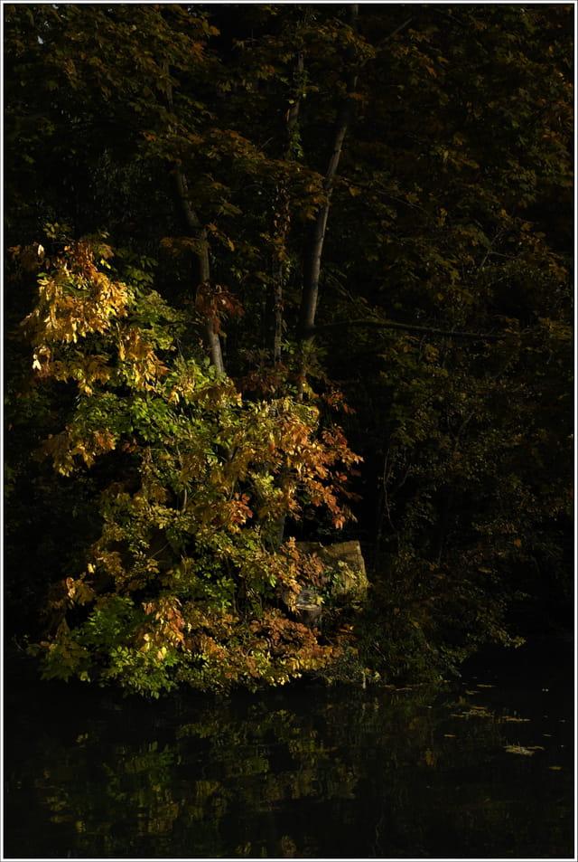 Rayon de soleil en automne