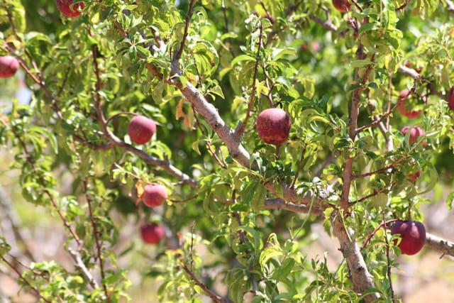 Récolte fruits et légumes2