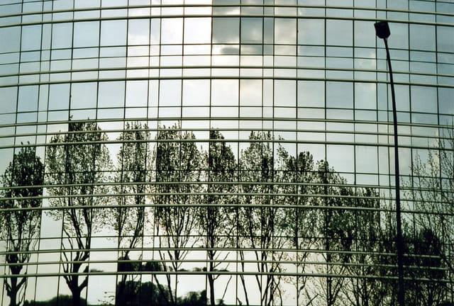 Reflets d'arbres dans un immeuble