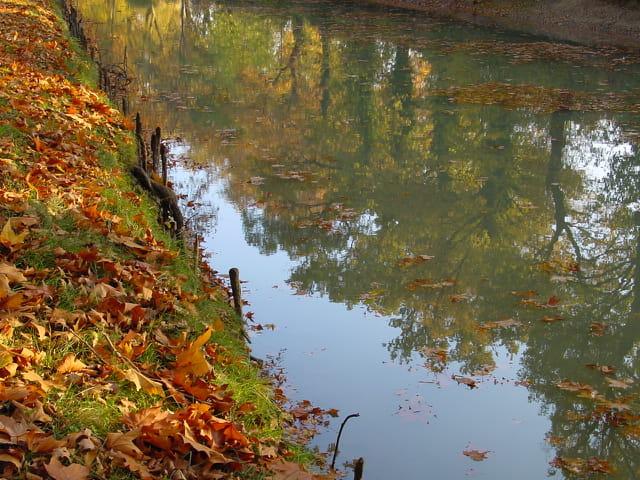 Reflets d' automne