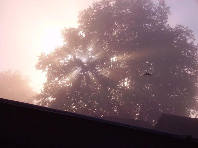 Reflets dans un arbre
