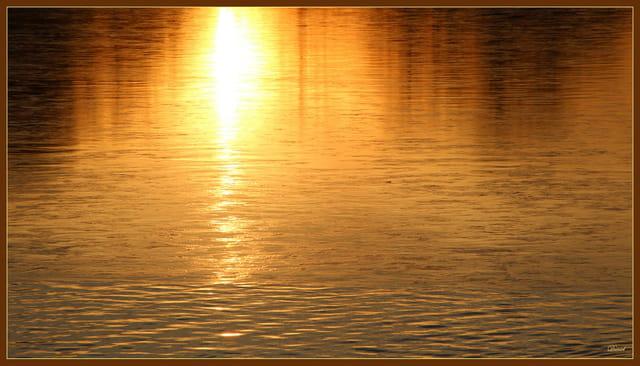 Reflets dorés