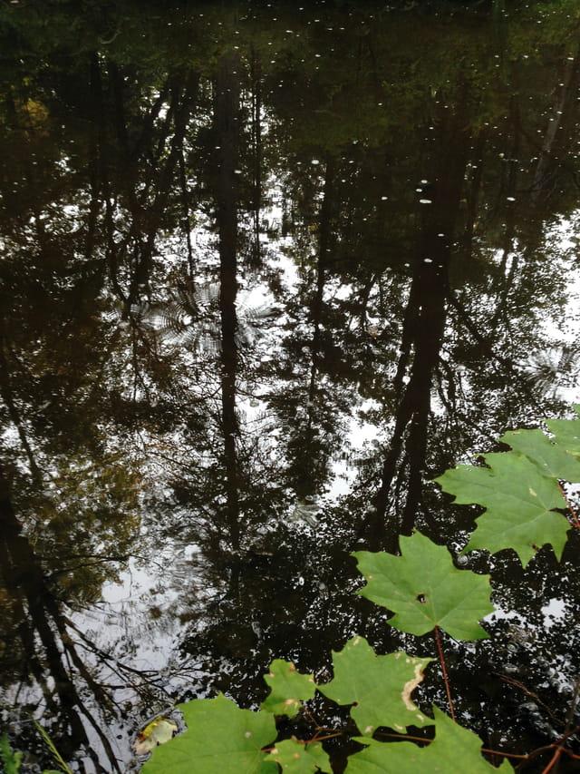 Reflets sur l'eau