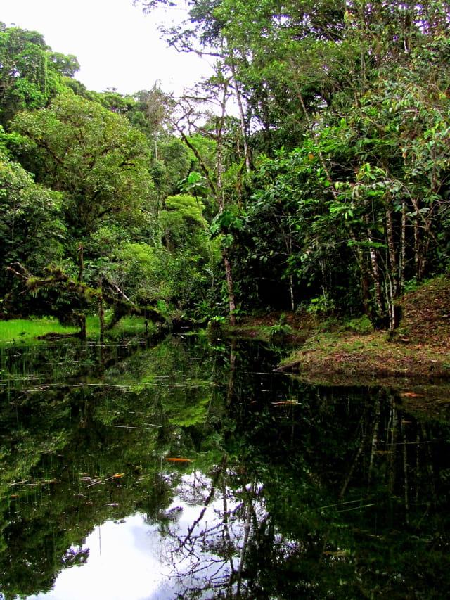 Reflets verts sur le lac
