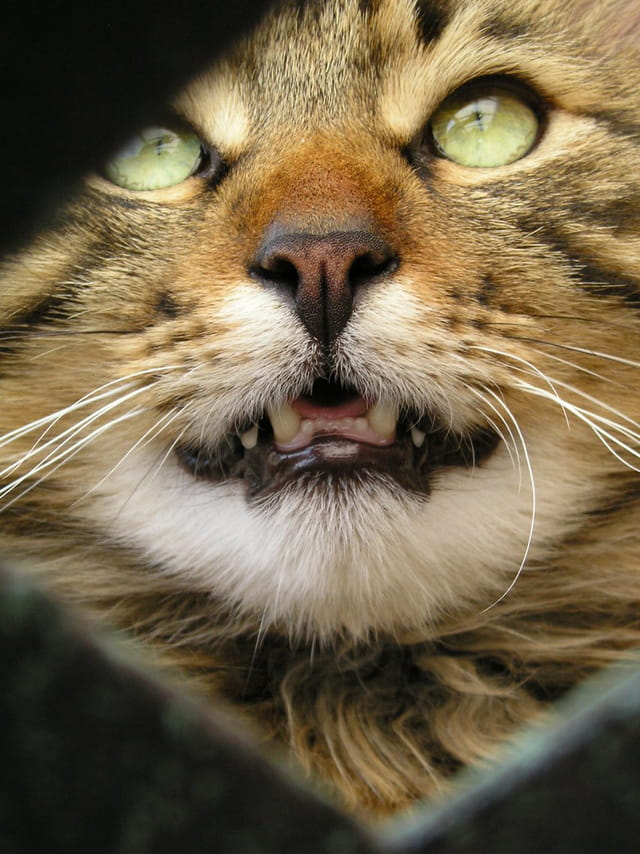 Regard tendre de chat