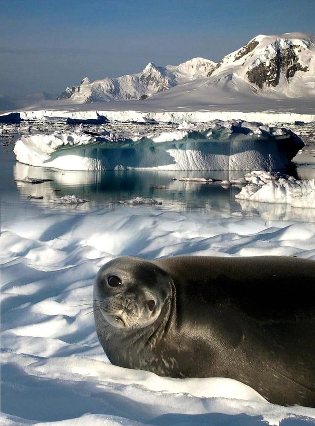 Regardez comme c'est beau l'Antarctique