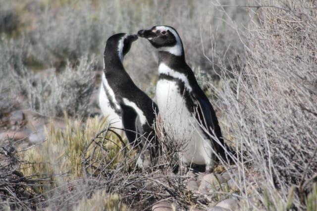 Rencontre avec les pingouins