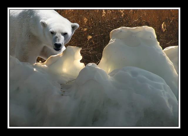 rencontre glacière sur les bords du Léman