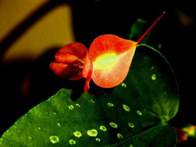 Repos d'une fleur