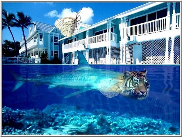 Requin-tigre d'avril