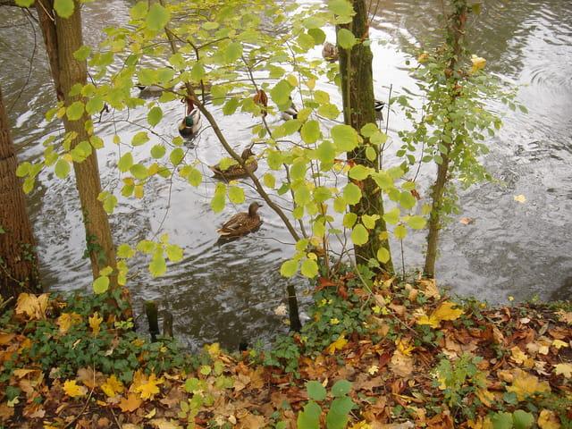 Reveil de canard en automne
