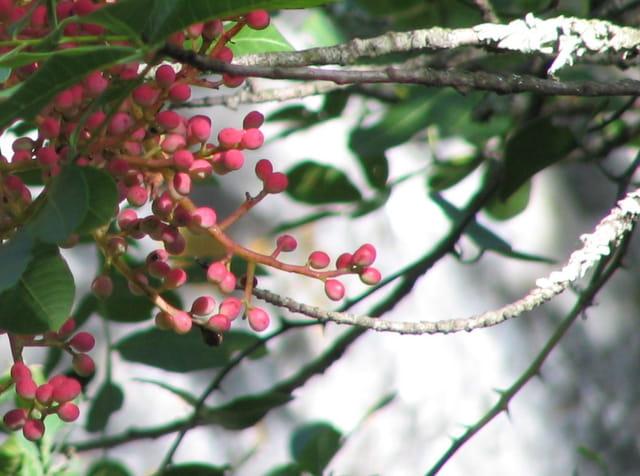 Rêverie en rose