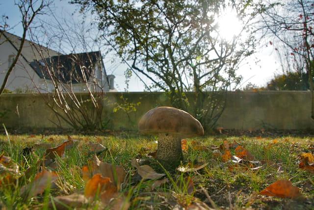 Rez de jardin par patrick caoudal sur l 39 internaute for Rez de jardin