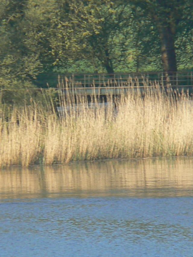 Rive de Loire