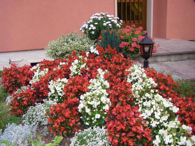 Rocaille fleurie par christiane dolle sur l 39 internaute for Rocaille fleurie