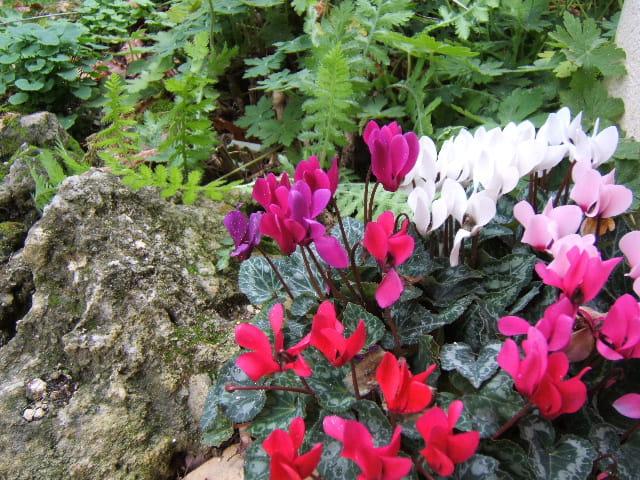 Rocaille fleurie par sylvie patry sur l 39 internaute for Rocaille fleurie