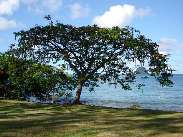 Rocher du Diamant - Martinique