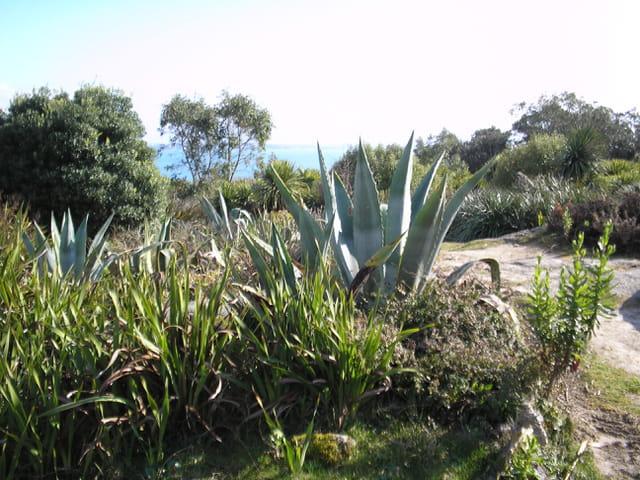 Roscoff jardin exotique